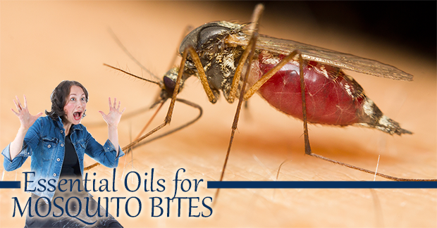 Essential Oils for Insect repellent