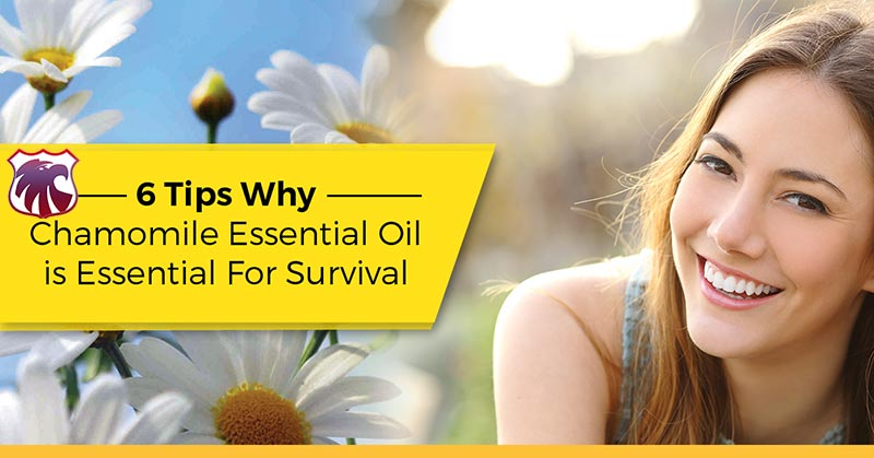 6-tips-why-chamomille-essential-oil-is-essential-for-survival